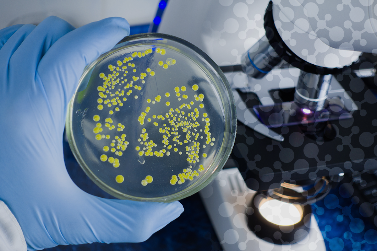 bacteria from anaerobic digestion